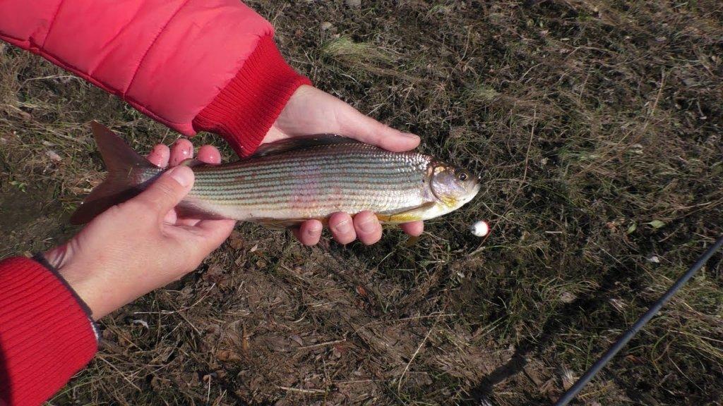 Рыбалка на хариуса на р. Бурея в октябре
