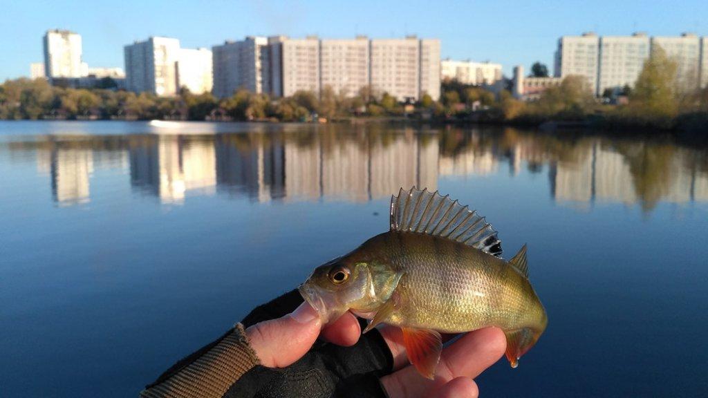Рыбалка - это поиск. Результат - это труд. Исследование - это рыбалка.