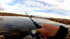 Рыбалка в затоне, ловля щуки из камыша, спиннинг осенью 2019