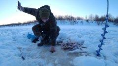 ОДНА ЛУНКА! 100 ОКУНЕЙ! Рыбалка на севере. Часть 2.