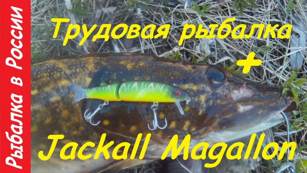 Щука 5.2 кг. на Jackall Magallon .Китайский воблер на щуку с AliExpress .