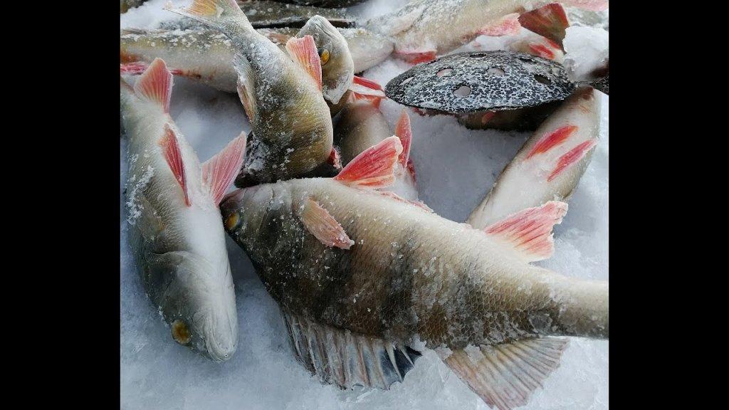 """Настоящая """"зимняя"""" рыбалка! Лед 2019-20, окунь на мормышку и щука на жерлицы"""