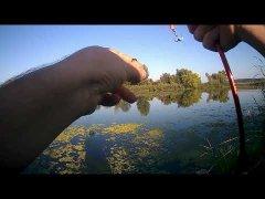 Ловля щуки на спиннинг, рыбалка на щуку Гинеевка