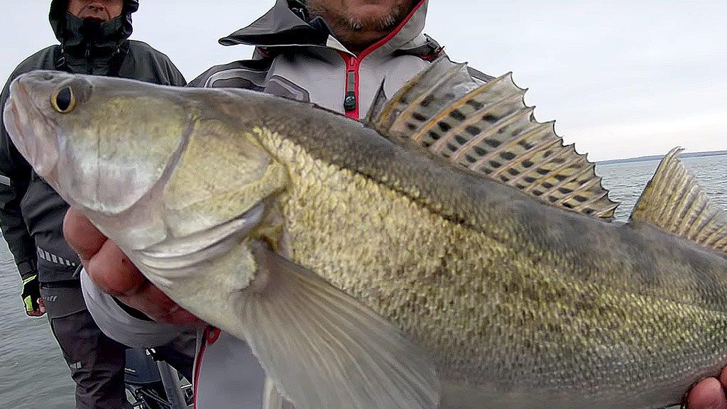 Рыбалка с гидом на Яузском водохранилище. Цель - судак