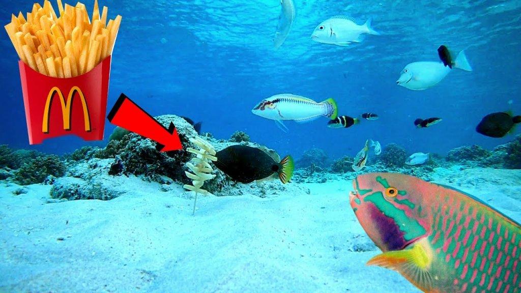 Реакция рыбы на КАРТОШКУ ФРИ и Манную болтушку! Подводная съемка