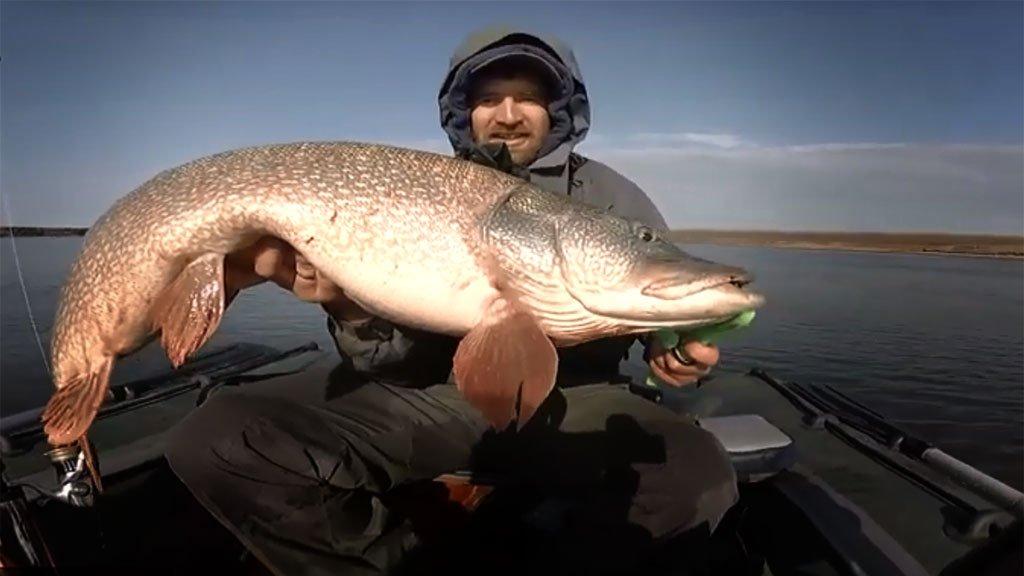 Трофейная рыба активно атакует только одну приманку из трех