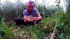 БАТЛ на рыбалке!!! Медовый кук против чесночного. Рыбалка на фидер