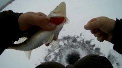 Рыбалка.пробный выезд на судака
