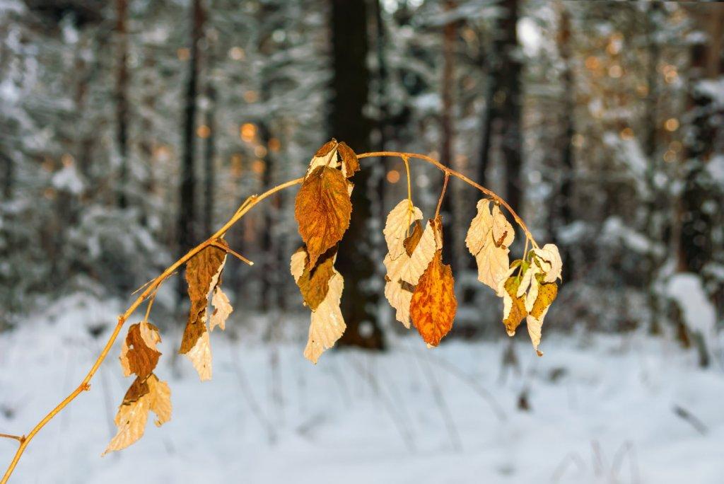 Кусочек осени среди зимы