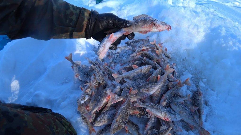 Рыбалка в лютый мороз. Надергал кучу окуней. Часть 2.