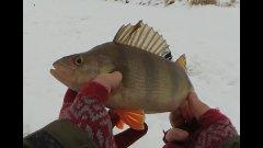 Горбач хорош! Лед 2019: рыбалка на плотву, окунь на мормышку и щука на жерлицы