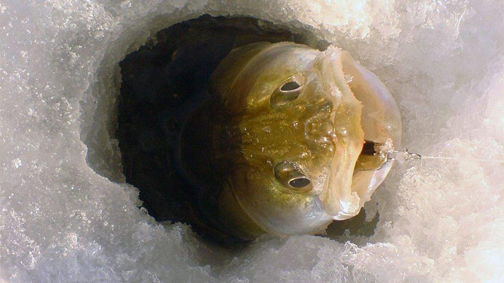 ТОП-10 зимних блесен на судака