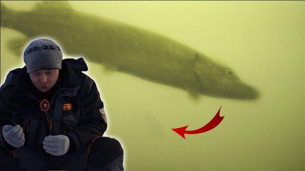 Щуки ломают удочки   зимняя рыбалка на щуку и окуня 2019   балансир   мормышка   подводная камера