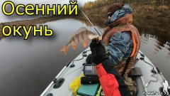 Осенний окунь на джиг 2019. Активный клев окуня. Тест лодки Ривьера 360 с мотором Сузуки 6 лс