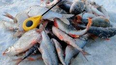 Рыбалка в Сузуне на Оби. Окунь на балансир и плотва на мормышку