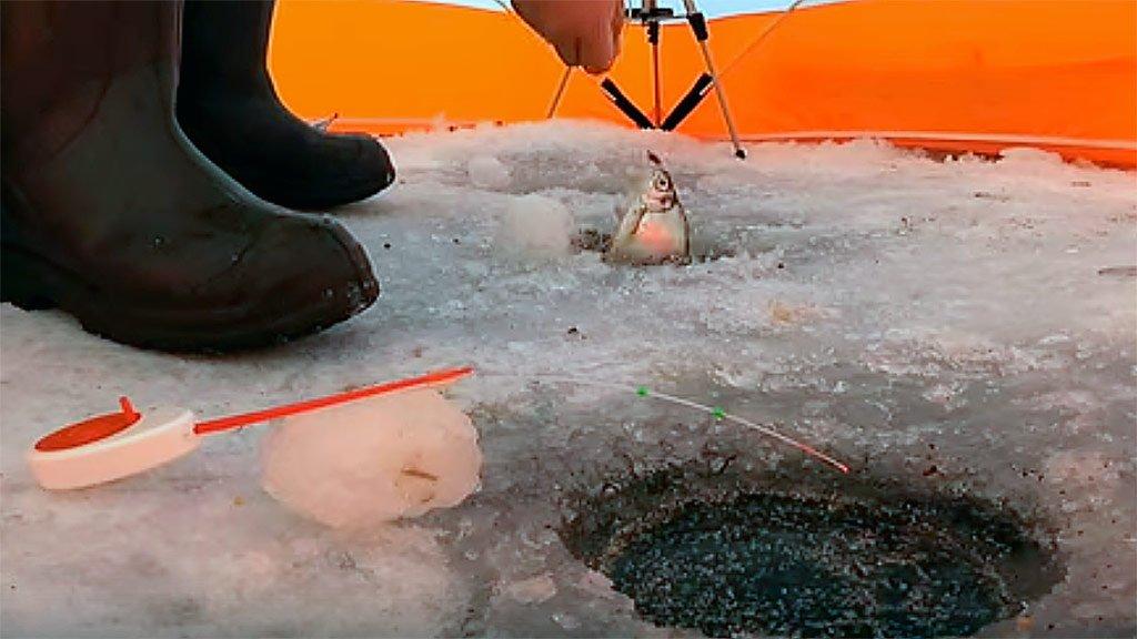 Ловля Шармана зимой со льда, зимняя рыбалка 2019 - 2020