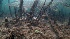 Щука и Окунь на Мигалку! Реакция рыбы на банку с мальком! Подводная съемка