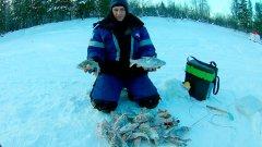 Ловля окуня и сороги зимой на Ямале. Зимняя рыбалка 2020 на балансир и мормышки