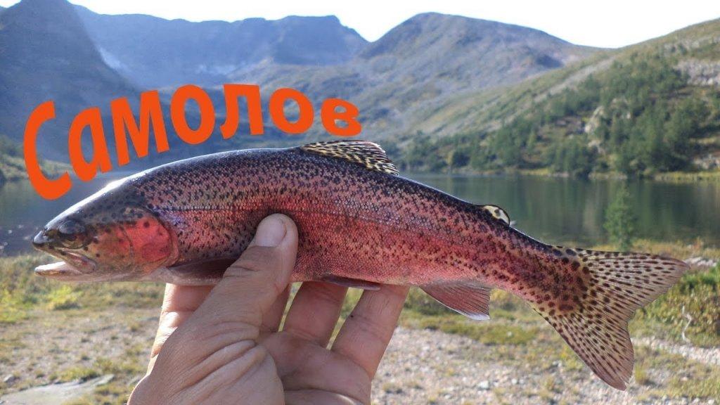 Самолов для Форели. Рыбалка в горах Кузнецкого Алатау