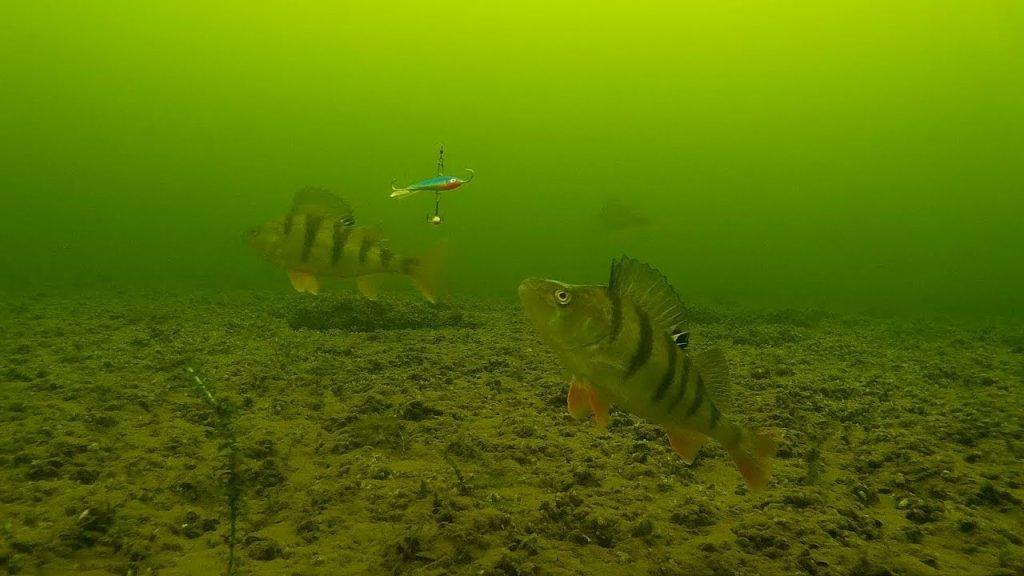 Тестирование самодельной камеры для рыбалки. Отличный результат