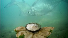 ВАРЕНИКИ с Картошкой и Грибами! Лещ, окунь, плотва! Реакция рыбы! Подводная съемка