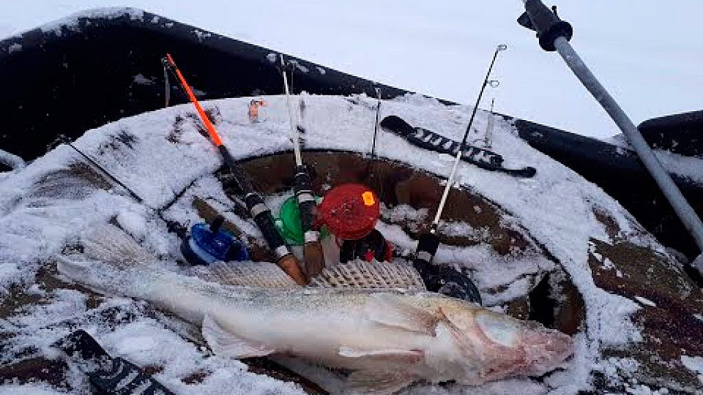 Рыбалка на судака на Обском море. Тайга Варяг 550. Веселый Выезд