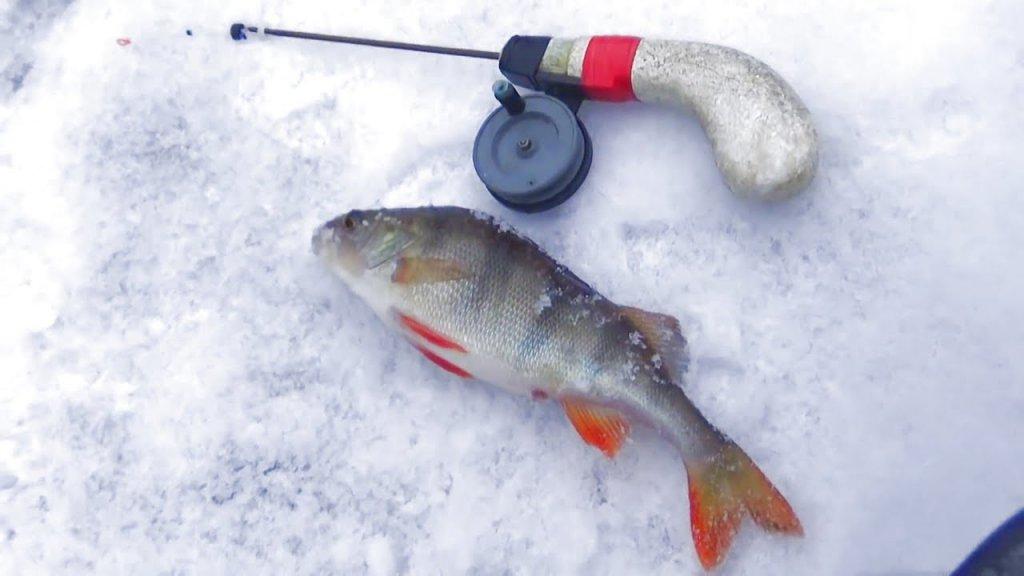 Рыбалка зимой на мормышку. Секреты ловли