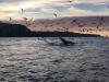 Пир Китов в Баренцевом море. Рыбалка на Кольском полуострове