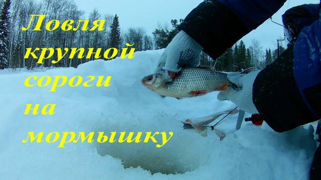 Зимняя рыбалка со льда на красивой старице. Ловля сороги со льда. Зимняя рыбалка 2019-2020.