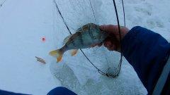 Рыбалка на Хапугу Раскладуху Зонтик Хлопок на озере Чаны
