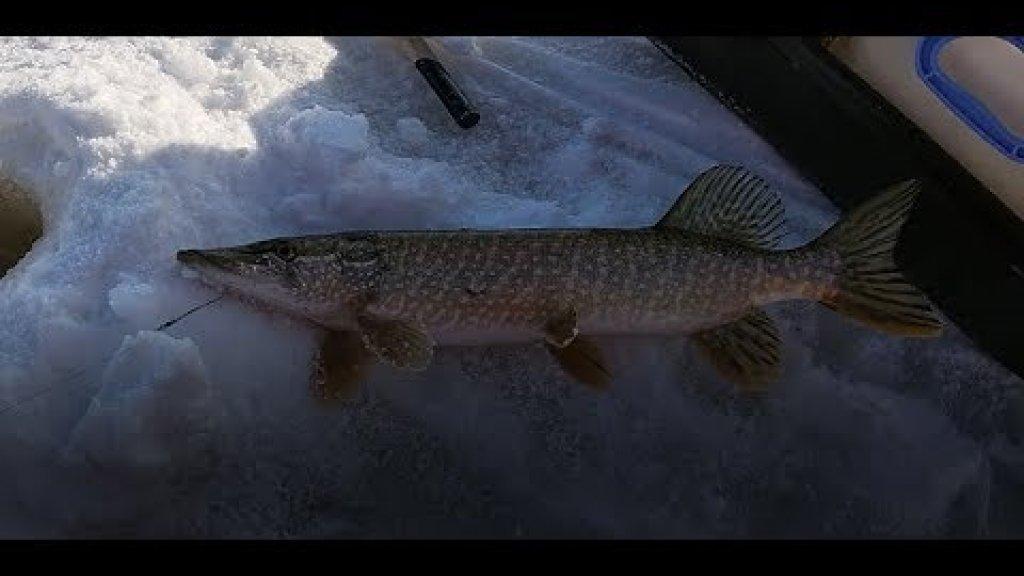 Рыбалка на ЖЕРЛИЦЫ в феврале! Щука размотала!!! Много щуки и окунь на жерлицы в ГЛУХОЗИМЬЕ!!!