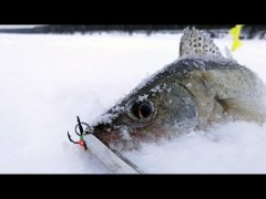 ОСТОРОЖНО, ЗЛЫЕ СУДАЧКИ! Зимняя рыбалка 2020, ловля судака на балансир, раттлин и блесну