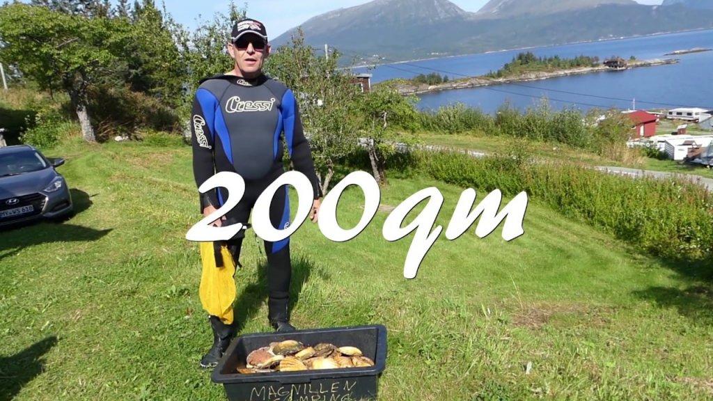 Дайвинг в норвегии.охота за гребешками день 1. Diving.jagd auf die jakobsmuscheln.