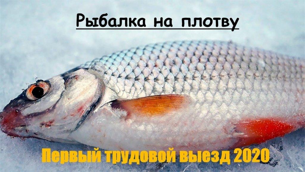 Рыбалка на плотву зимой, первый выезд в 2020. Трудовая рыбалка