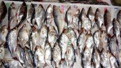 Как правильно солить рыбу. Инструкция