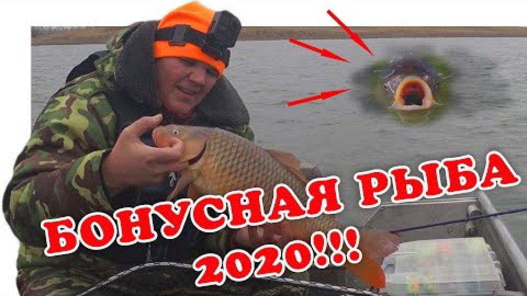 Когда Сазан Вытесняет Судака (Рыбалка 2020)   #Vovabeer
