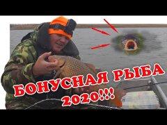 Когда Сазан Вытесняет Судака (Рыбалка 2020) | #Vovabeer