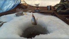 Удачная зимняя рыбалка в феврале