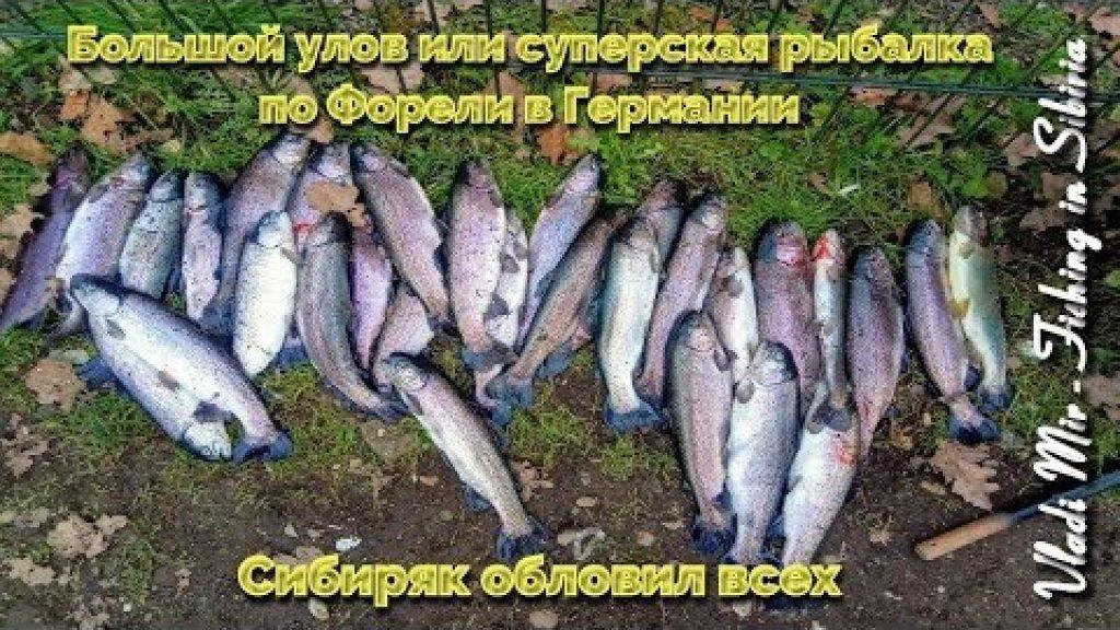Большой улов или суперская рыбалка на ФОРЕЛЬ в ГЕРМАНИИ. Сибиряк облавливает всех!!!