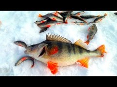 Окунь ГИГАНТ. Вот это да!!! Весенняя рыбалка на Озере. Рыбалка на косынку (хапугу) зимой в Сибири