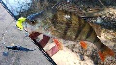 Ловля на НОВЫЙ ДЖИГ РИГ с берега весной пассивной рыбы, тестируем СУПЕРмягкие силиконовые приманки