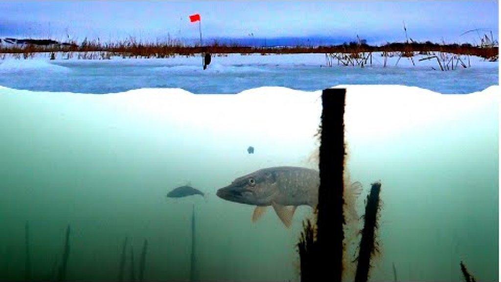 Ловля Щуки на Жерлицы с подводными камерами! Подводная съемка