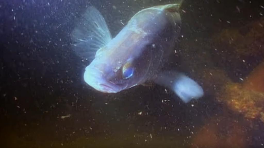 Коротко о том - что делает судак ночью и почему охотится в темноте?