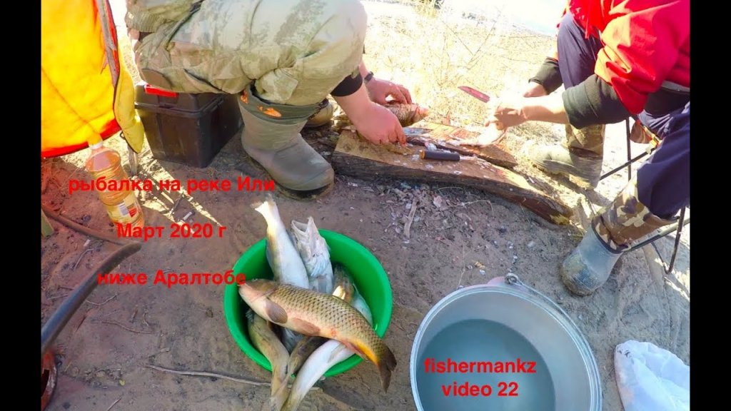 рыбы много - рыбалки мало, река Или март 2020 г, мини видео отчет