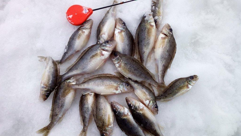 Крупный морской ёрш на мормышку. Весенняя рыбалка 2020