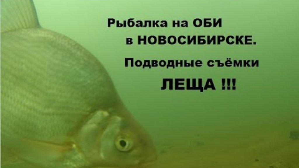 Зимняя рыбалка на Оби в Новосибирске. Подводные съёмки леща экшен камерой SJCAM SJ7 STAR