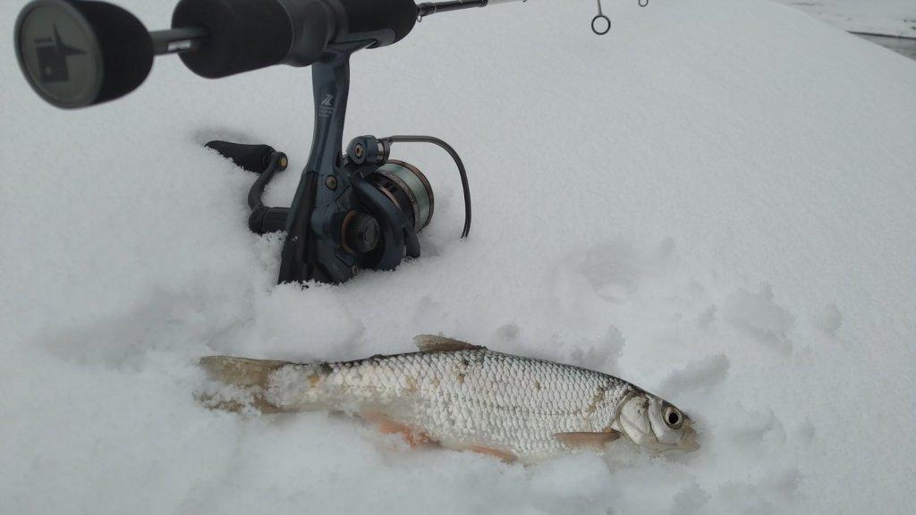 Командный выезд на Угрюмку. Первый опыт ловли белой рыбы на спиннинг.
