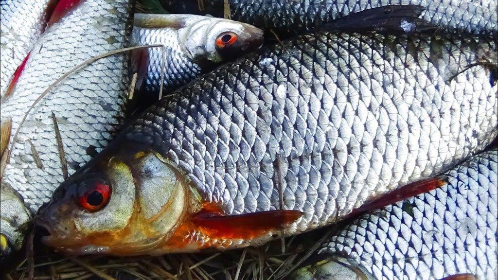 Ловля на поплавок.  Секреты  рыбалки