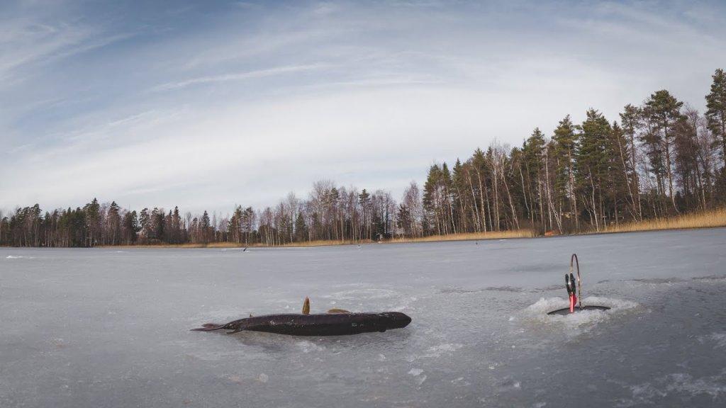 Как влияет треск льда на щуку и другую рыбу