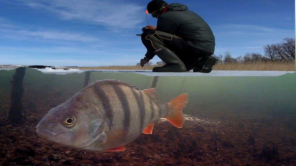 Весенняя Рыбалка на льду. Щука на жерлицы. Подводная съемка